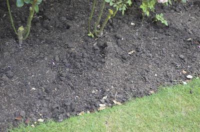 Земля в саду волшебным образом превращается в чернозем. Фото автора