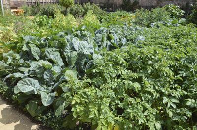 ЭМ-препараты дают возможность выращивать органическую продукцию без нитратов и нитритов