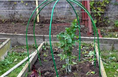 Для изготовления каркаса хорошо подходят огородные дуги