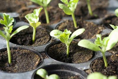 Молодым растениям нужно создать благоприятные условия для роста