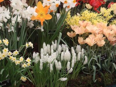 Первоцветы сажаем отдельно. Фото автора