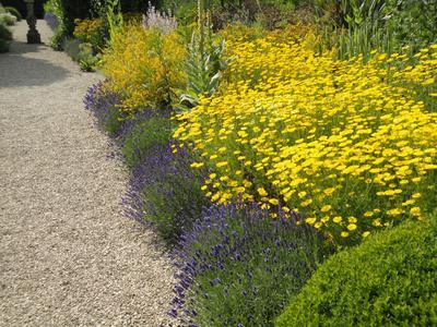 В просторном саду можно высаживать большие массивы растений. Фото автора