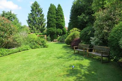 Создание идеального газона потребует неимоверных усилий садовода. Фото автора