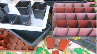 Раствором марганцовки дезинфицируют рассадную тару (Фото с сайта natplant.ru)