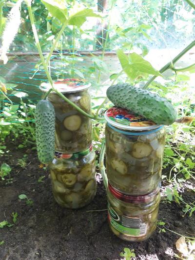 Салат из огурцов и лука на зиму; Зелёный. Пошаговый рецепт с фото