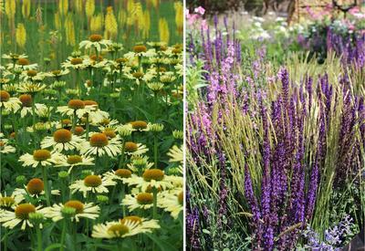 Слева - нюанс по цвету, справа - нюанс по форме соцветий