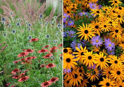 Слева — контраст по цвету форме соцветий, справа — контраст по цвету, нюанс по форме цветков