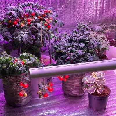 При уменьшении расстояния от растения до фитосветильника увеличивается интенсивность света
