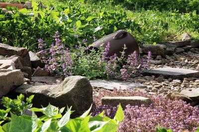 Низенький котовник в каменистом саду