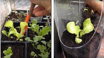 Высаживаем растения. Фото автора