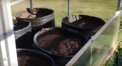 Мешки для выращивания помидоров в теплице
