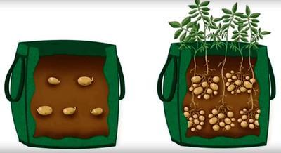 Схема посадки картошки в два яруса