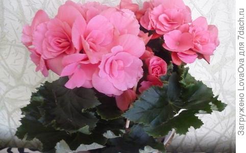 """Конкурс """"Домашние цветы"""""""