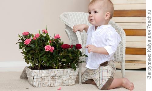 Цветы для детской комнаты – какие растения полезны для ребенка
