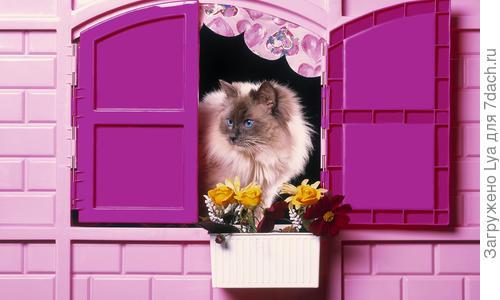 Зимний домик для кошки на улице, особенности конструкции