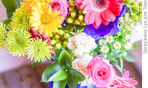 Какие цветы самые стойкие