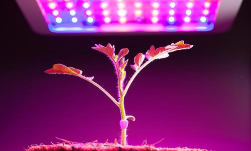 Как выбрать лампы для досвечивания рассады (индукционные, натриевые, светодиодные ленты, ультрафиолетовая) и подсветки растений
