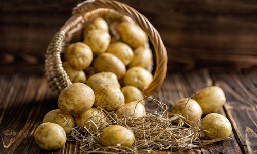 Почему гниет картошка в земле, сразу после уборки и в погребе