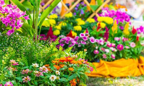 Растения для высадки на клумбу