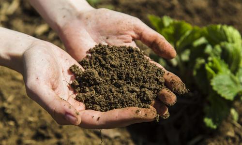 Органические удобрения - виды и ценность