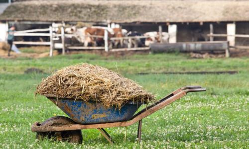 Перегной крупного рогатого скота, перегной КРС (фото и видео)