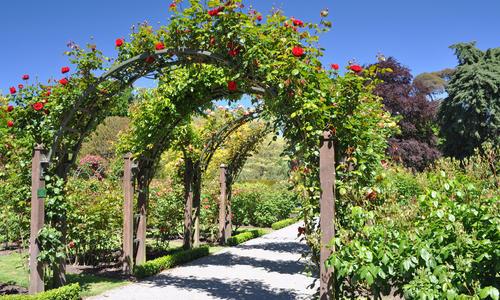 Как построить садовую арку своими руками?