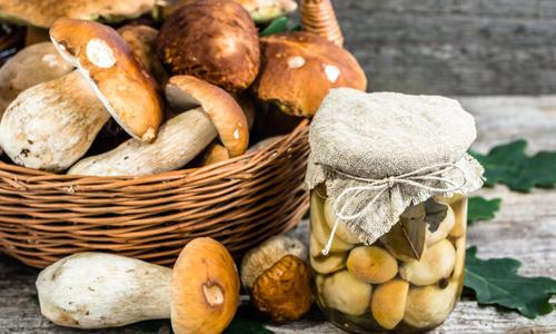 Как засолить грибы скрипицы на зиму