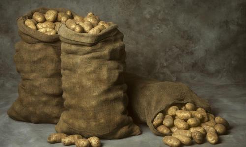 Как хранить картофель в бочке