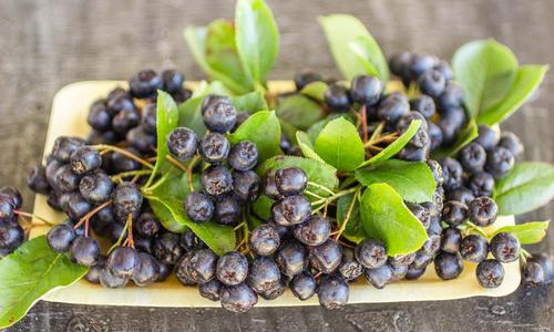 Арония черноплодная: лечебные свойства и противопоказания
