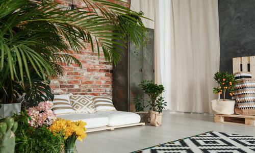 Комнатные растения для зала