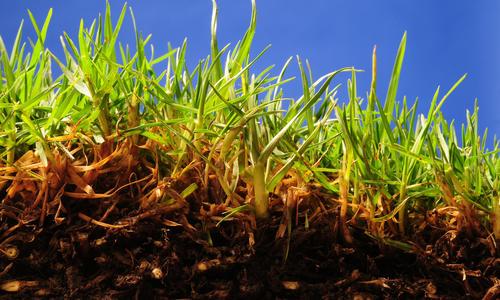 Что такое гумус почвы, как образуется, состав, фото, определение, содержание в почве