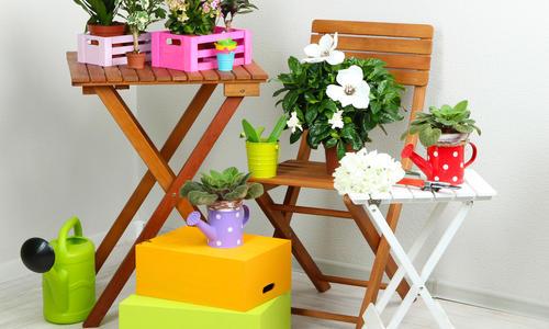 Как разводить цветы в домашних условиях