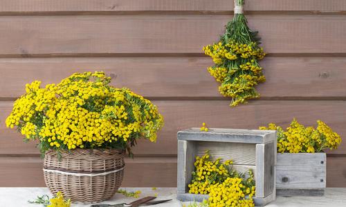 Купить инсектициды для сада и огорода в интернет магазине