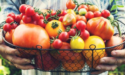Сорта помидоров для дома