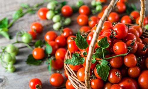Лучшие сорта томатов черри для теплицы