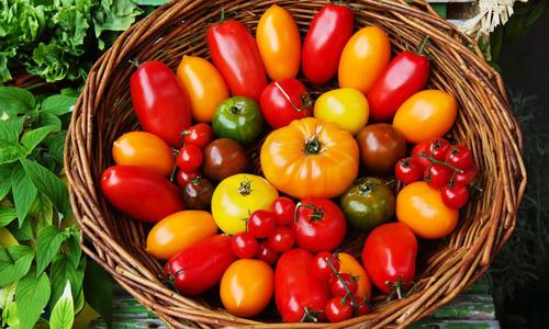 Томат Чибли описание гибридного сорта его выращивание с фото