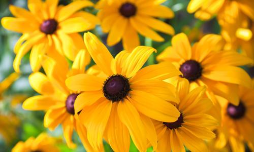Какие садовые растения цветут осенью