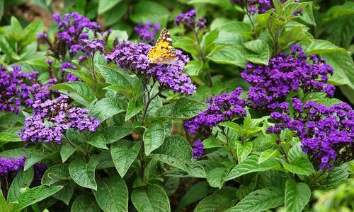 Самые ароматные цветы для сада