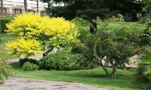 Осеннее дерево с желтыми листьями
