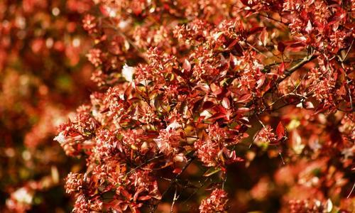 Кустарник с красными ягодами осенью
