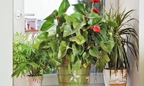 Как посадить цветы на подоконнике на улице. Какие цветы посадить в цветнике за окном