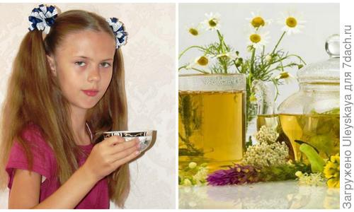 Травяной чай: польза и вред, лекарственные травы и способы их заваривания