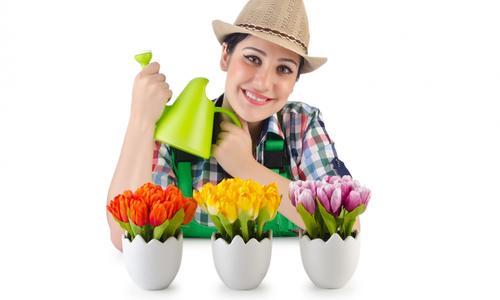 Цветы для выгонки в теплице
