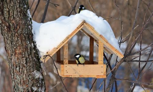 Кормушка для птиц на подоконник своими руками