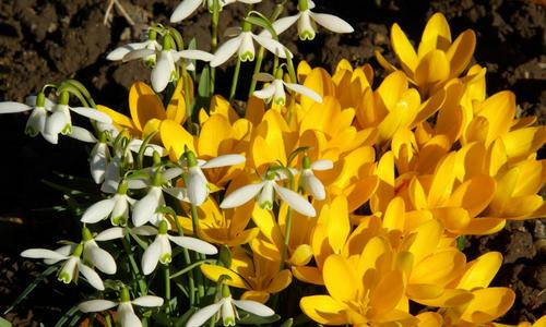 Цветы Цветущие Весной ТОП-20 Первоцветов (Описание & Фото)