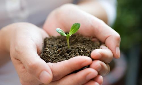Подготовка земли для посадки в открытый грунт. Как правильно подготовить почву