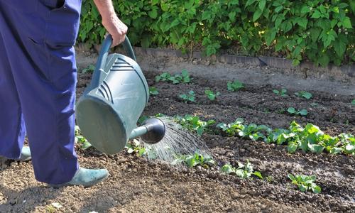 Работы в саду в начале лета
