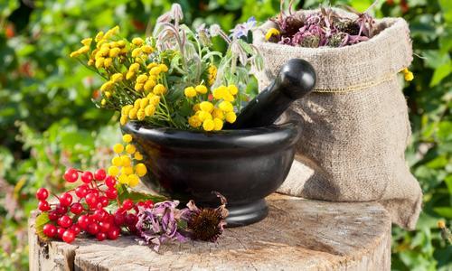 Лекарственные растения — сбор, сушка, химический состав и применение » Перуница