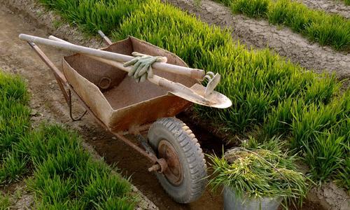 Как приготовить зеленое удобрение из травы и применять его на огороде