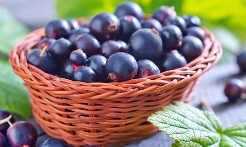 Сколько лет плодоносит черная смородина сроки жизни и урожайности
